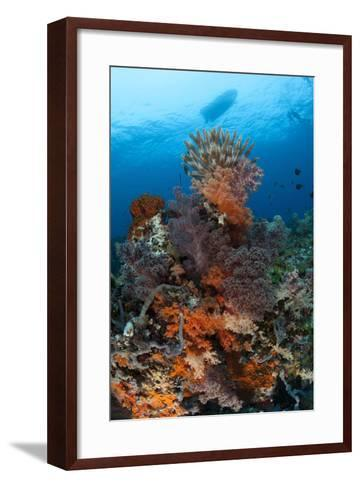 Colorful Crinoids and Soft Corals Adorn a Reef in Raja Ampat--Framed Art Print