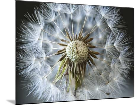 Dandelion Seed-Margaret Morgan-Mounted Photographic Print