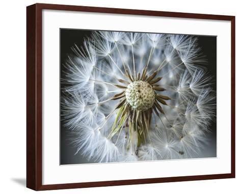Dandelion Seed-Margaret Morgan-Framed Art Print