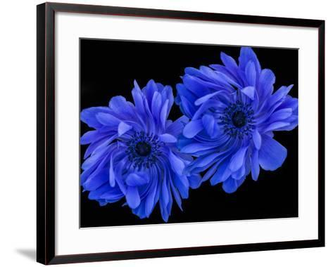 Blue Anemone-Margaret Morgan-Framed Art Print