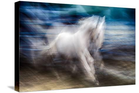 White Beauty-Ursula Abresch-Stretched Canvas Print