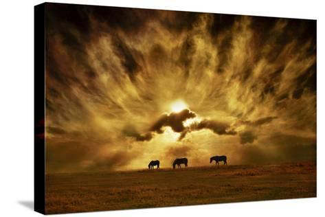 Wild Horses!-Adrian Campfield-Stretched Canvas Print