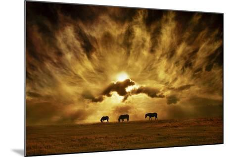 Wild Horses!-Adrian Campfield-Mounted Photographic Print
