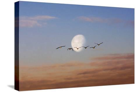 Fly Me to the Moon-Adrian Campfield-Stretched Canvas Print