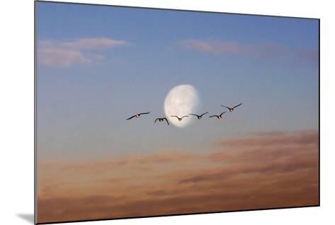 Fly Me to the Moon-Adrian Campfield-Mounted Photographic Print