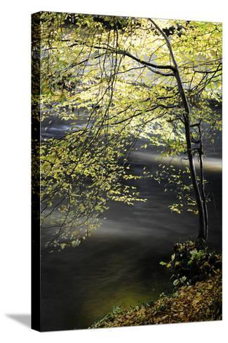 Emotions in Motion-Philippe Sainte-Laudy-Stretched Canvas Print