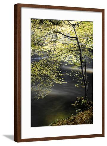 Emotions in Motion-Philippe Sainte-Laudy-Framed Art Print
