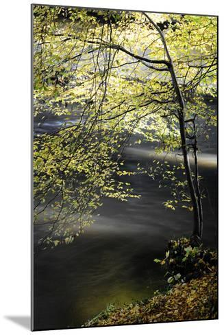 Emotions in Motion-Philippe Sainte-Laudy-Mounted Photographic Print