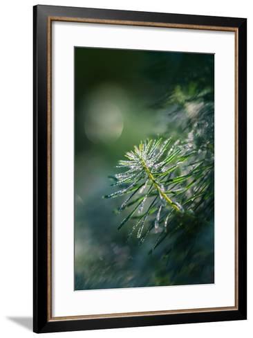 In the Morning-Ursula Abresch-Framed Art Print