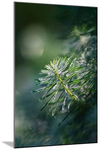 In the Morning-Ursula Abresch-Mounted Photographic Print