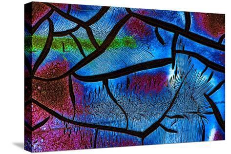 Glow in the Dark 2-Ursula Abresch-Stretched Canvas Print