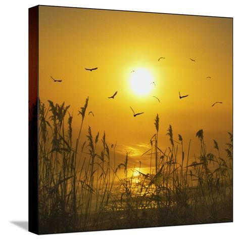Dreams That Fly Away-Adrian Campfield-Stretched Canvas Print