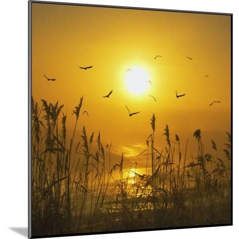 Dreams That Fly Away-Adrian Campfield-Mounted Photographic Print