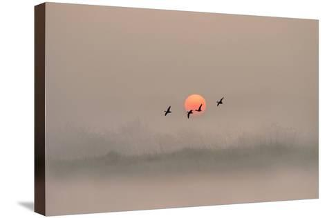 Dawn over the Marshland-Adrian Campfield-Stretched Canvas Print
