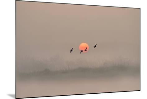 Dawn over the Marshland-Adrian Campfield-Mounted Photographic Print