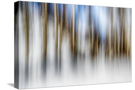 Winter Birches-Ursula Abresch-Stretched Canvas Print