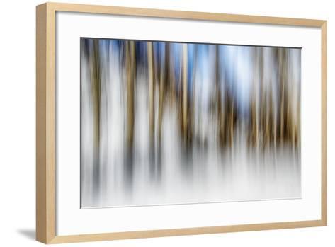 Winter Birches-Ursula Abresch-Framed Art Print