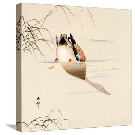 Diving Mallard-Koson Ohara-Stretched Canvas Print