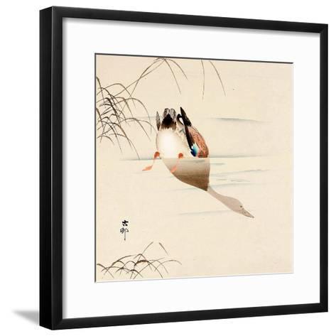 Diving Mallard-Koson Ohara-Framed Art Print