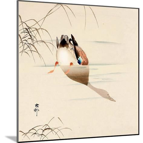 Diving Mallard-Koson Ohara-Mounted Giclee Print