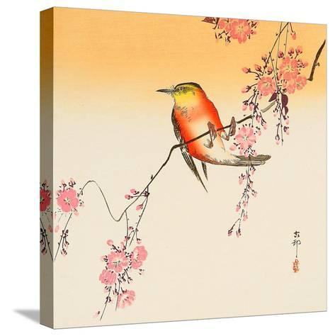 Red Bird and Cherry Blossoms-Koson Ohara-Stretched Canvas Print