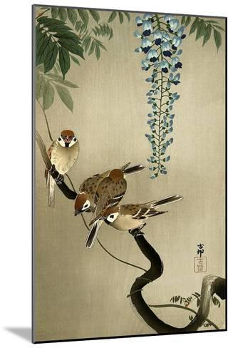 Sparrows and Wisteria-Koson Ohara-Mounted Giclee Print