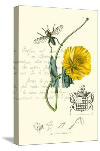 Naturalist's Montage VI-Vision Studio-Stretched Canvas Print