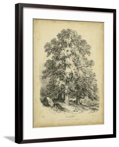 The Sycamore-George Barnard-Framed Art Print