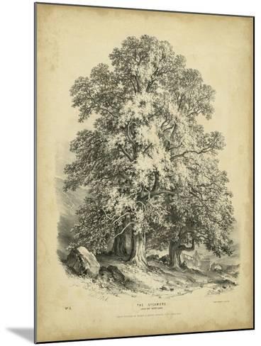 The Sycamore-George Barnard-Mounted Art Print
