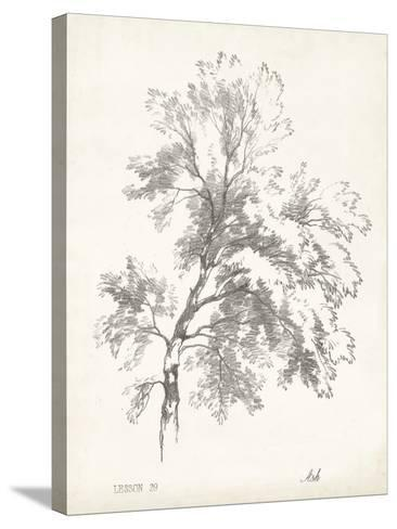 Ash Tree Study--Stretched Canvas Print