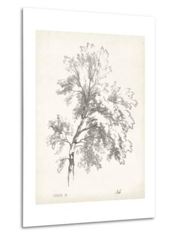 Ash Tree Study--Metal Print