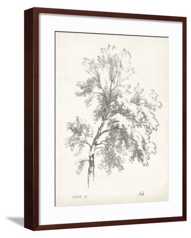 Ash Tree Study--Framed Art Print