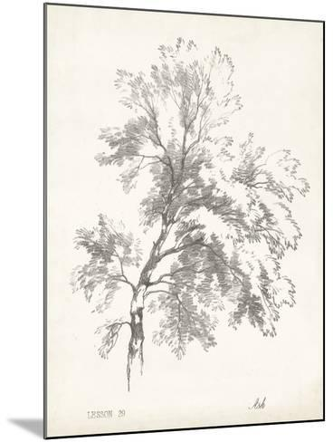 Ash Tree Study--Mounted Art Print