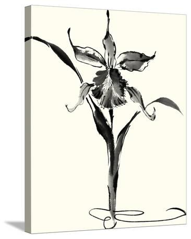 Studies in Ink - Cattleya-Nan Rae-Stretched Canvas Print