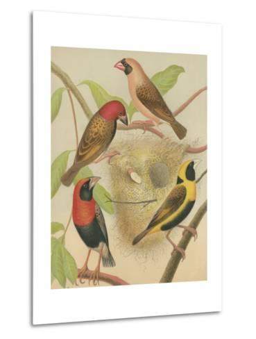 Birdwatcher's Delight II-Cassell-Metal Print