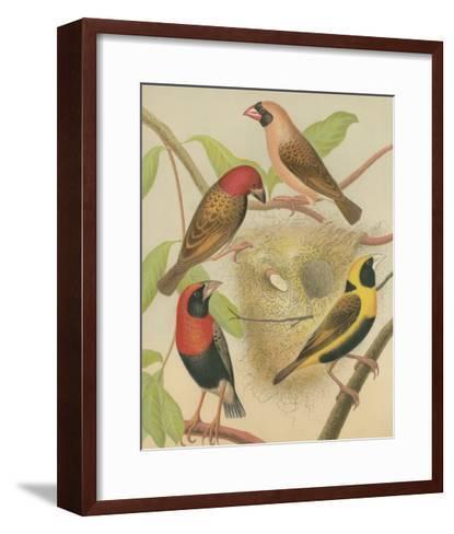Birdwatcher's Delight II-Cassell-Framed Art Print