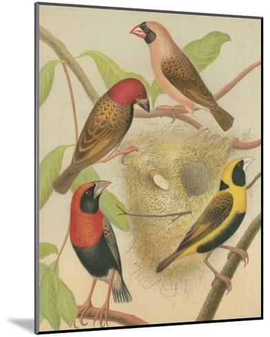 Birdwatcher's Delight II-Cassell-Mounted Art Print