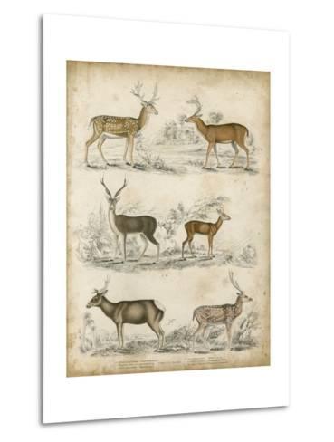 Non-Embellished Species of Deer--Metal Print
