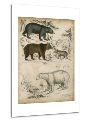 Non-Embellished Species of Bear--Metal Print