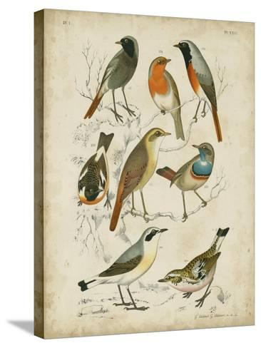 Non-Embellished Avian Gathering I-G^ Lubbert-Stretched Canvas Print