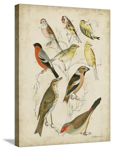 Non-Embellished Avian Gathering II-G^ Lubbert-Stretched Canvas Print