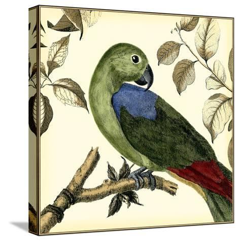 Tropical Parrot III-Martinet-Stretched Canvas Print