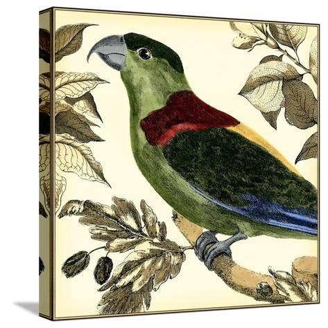 Tropical Parrot IV-Martinet-Stretched Canvas Print