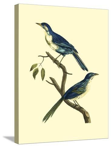 Vintage Bird Pair II-Levaillon-Stretched Canvas Print