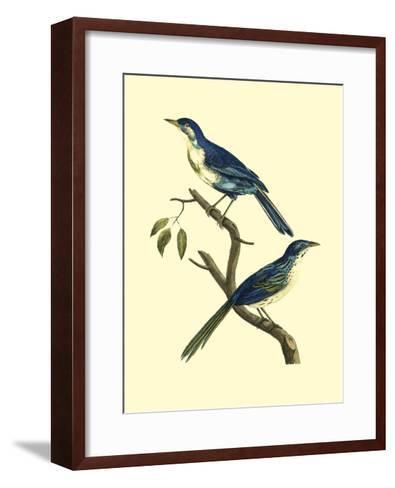 Vintage Bird Pair II-Levaillon-Framed Art Print