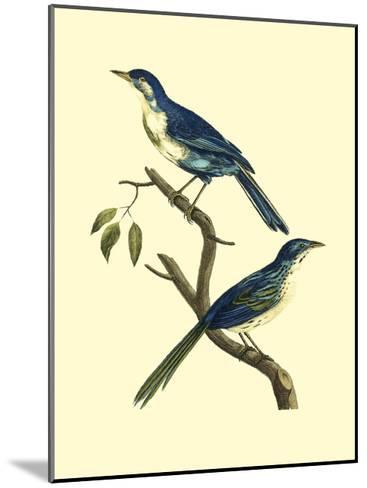 Vintage Bird Pair II-Levaillon-Mounted Art Print