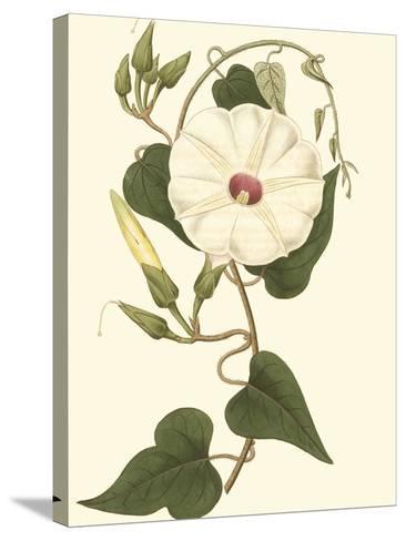 Blossoming Vine I-Sydenham Teast Edwards-Stretched Canvas Print