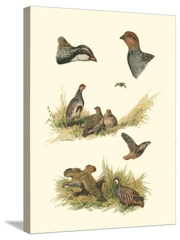Partridge--Stretched Canvas Print