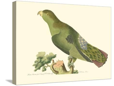 Purple-Tailed Parakeet--Stretched Canvas Print
