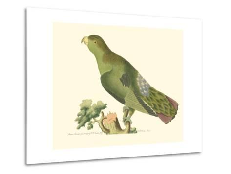 Purple-Tailed Parakeet--Metal Print